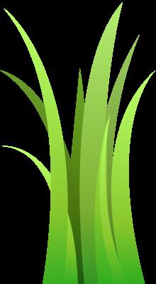 turf grass
