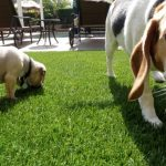 Synthetic Pet Turf Company Del Mar, Artificial Pet Grass Backyard Installation