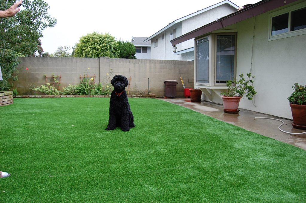 Synthetic Lawn Pet Turf Del Mar, Top Rated Artificial Grass Installation for Dogs