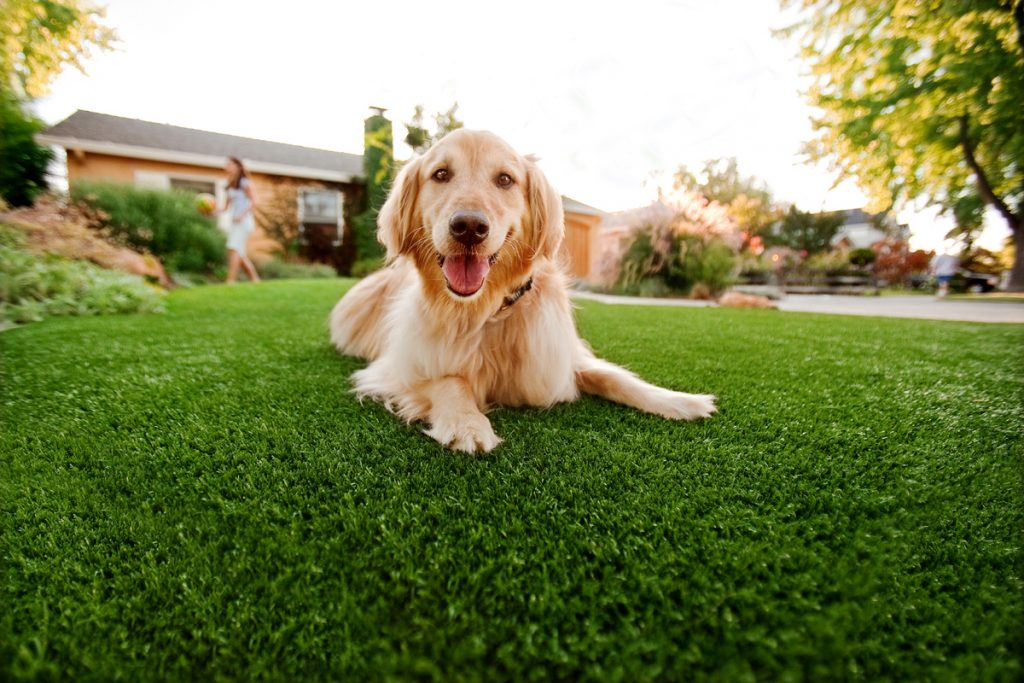 Synthetic Grass For Dogs Del Mar, Artificial Lawn Dog Run Installation